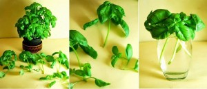 Grow Vegetables Herbs Without Soil