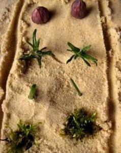 Sandpit Garden